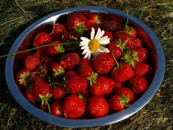 Как правильно выращивать?