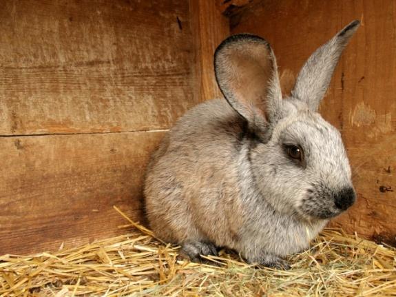 Кролик в клетке!