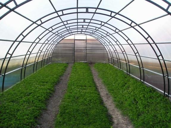 Тонкости организации тепличного хозяйства