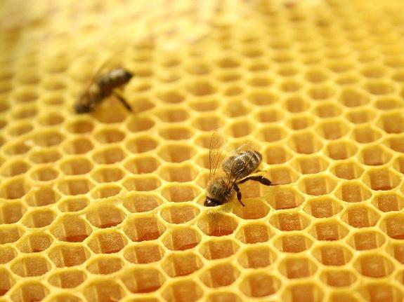 Какой мед выберем?