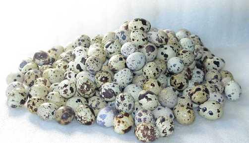 Очень красиво выглядят перепелиные яйца!