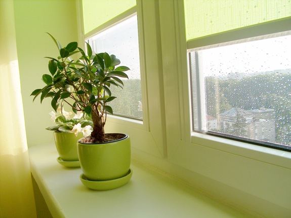 Домашние растения на подоконнике!