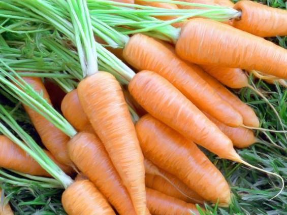 Делаем деньги на моркови